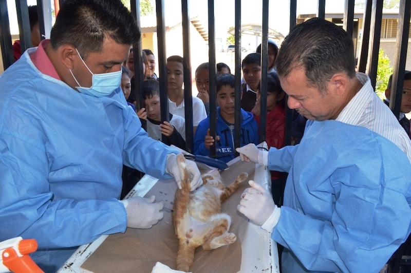 Llevarán jornadas de esterilización de mascotas a la costa de Caborca