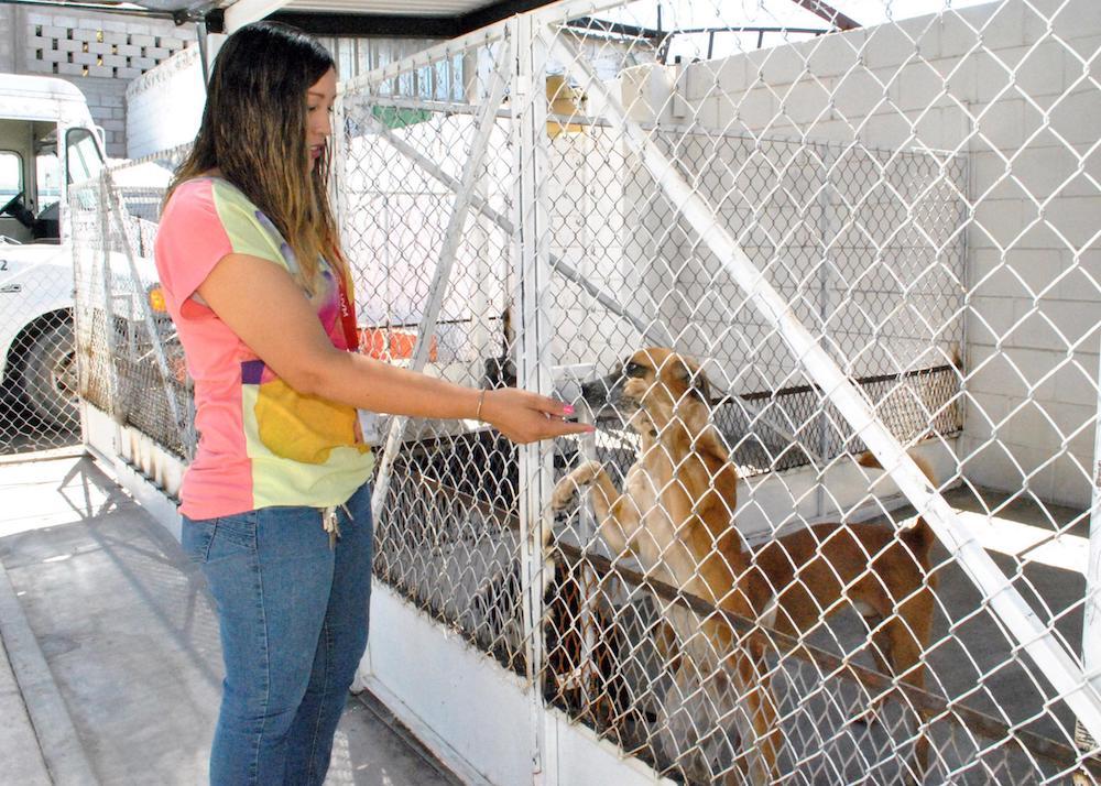 Invitan a dar una oportunidad de vida a perros y gatos abandonados