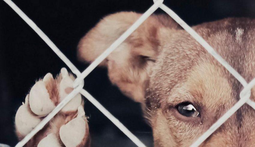 La justicia por violencia contra animales es también inútil
