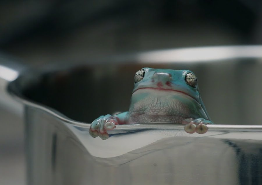 La rana hervida
