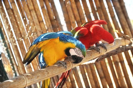 Tendrá horario normal el Centro Ecológico de Sonora en vacaciones